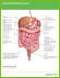 Graphic icon with text of internal stomach region